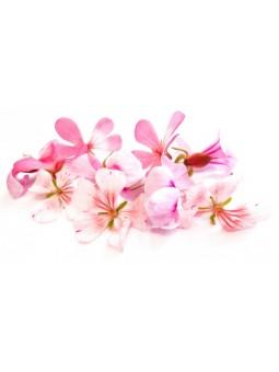 fleur de géranium bourbon